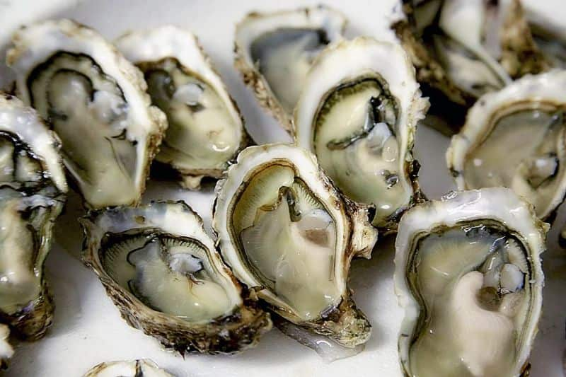 National oyster day,                 oyster shell seafood                shell pearl valuable                oyster shell clams
