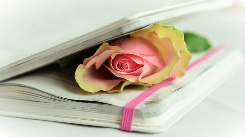 poetry rose book poetry