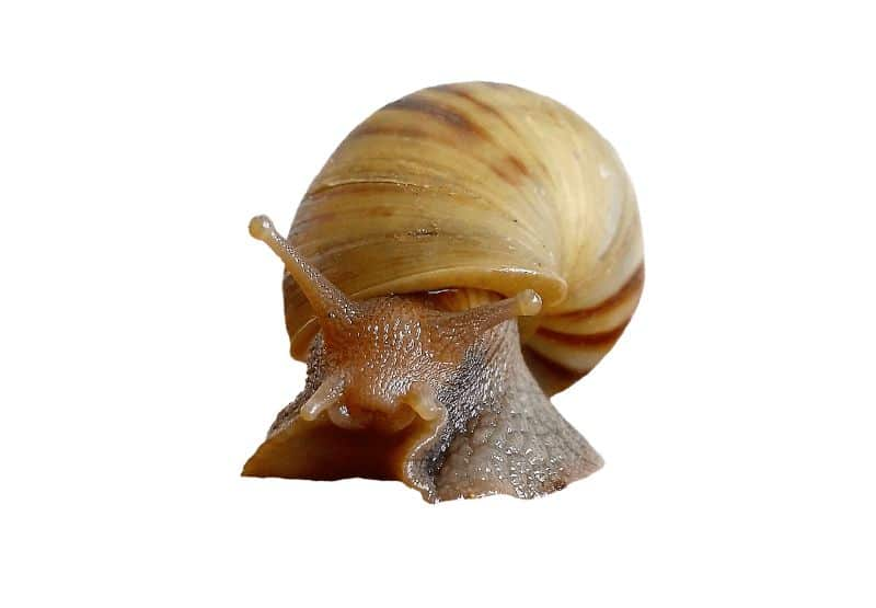 National slime day,                 snail shell molluscs