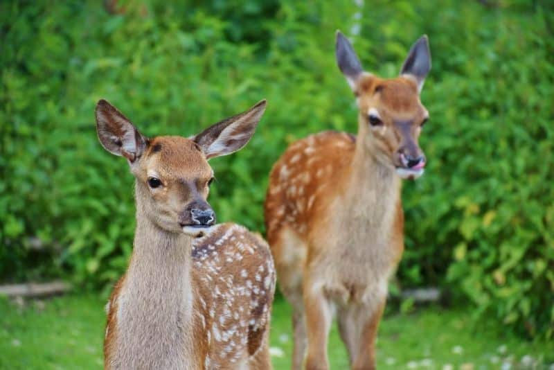 National video-game day,                 deer kitz wild                hirsch fallow deer white                spotted deer wildlife
